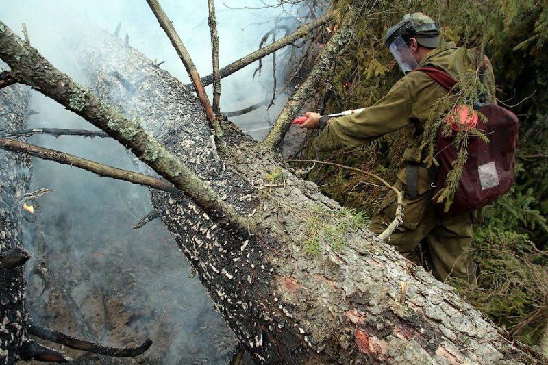 Extinguishing Wildfires 55