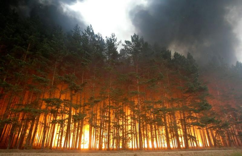 Extinguishing Wildfires 65