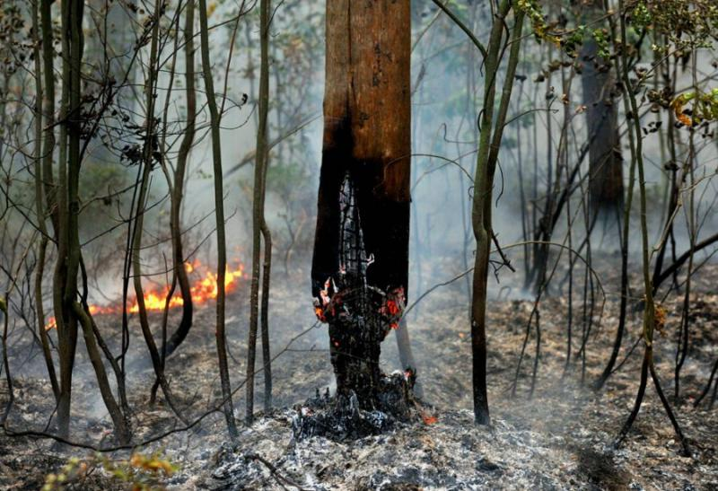 Extinguishing Wildfires 77