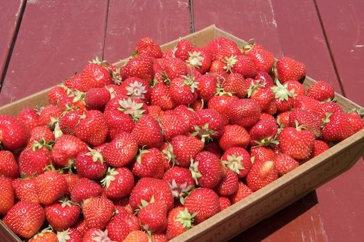 $44 of Strawberries
