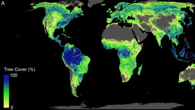 How trees could save the climate