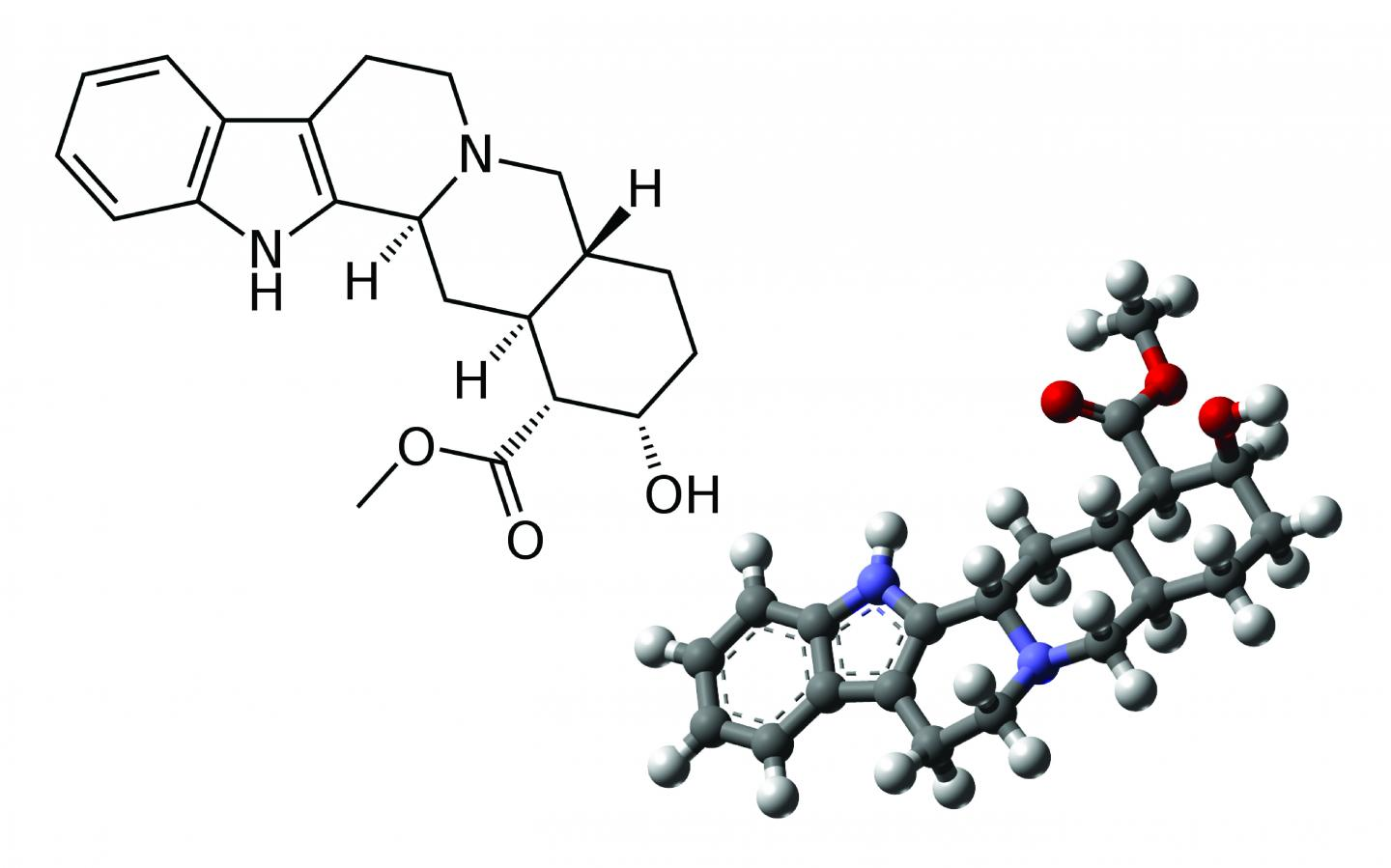 2 D And 3 D Structure Of Yohimbine Image