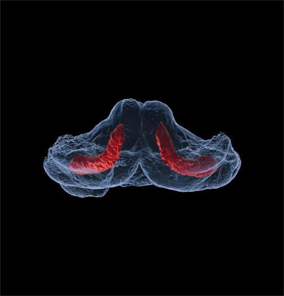 Bird insight into human ciliopathies