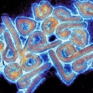 Un virus nou, transmis de la animale la oameni, descoperit în Rusia. Viitoarea pandemie?