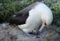 Un miracol al Naturii! O pasăre a făcut pui la 70 de ani.
