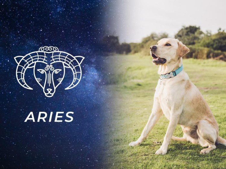 Best Dog Breeds for All 12 Horoscope Signs | FamilyMinded