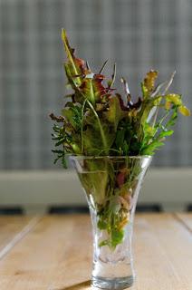 Bladgrönsaker i en glasvas hos Farbror Grön