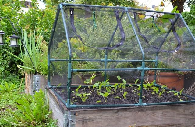 Pallkrage växthus med nät Farbror Grön