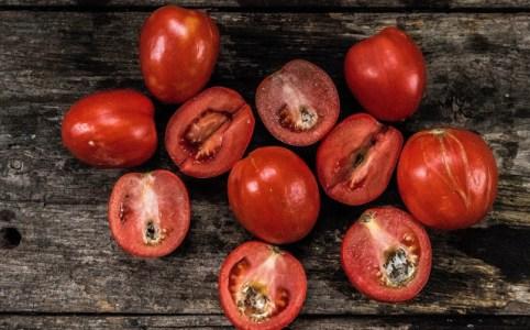 Pistillröta i tomater