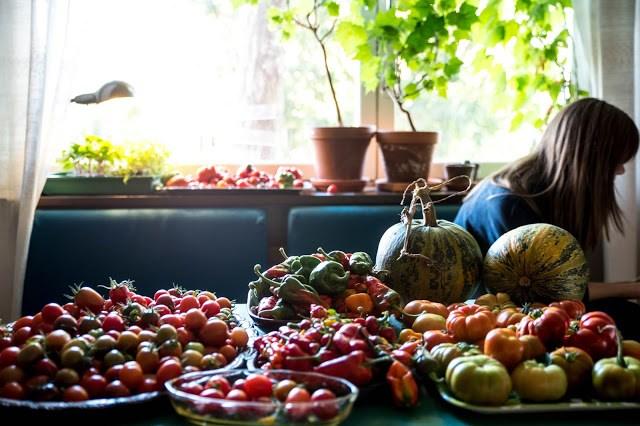 Skörd tomat chili pumpa Farbror Grön