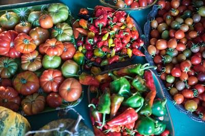 Skörd chili tomat Farbror Grön