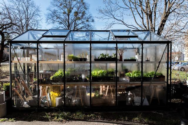 Farbror Gröns växthus i maj