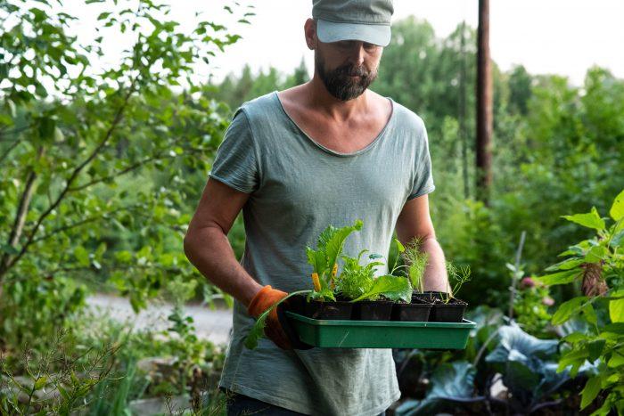 Johannes Wätterbäck, Farbor Grön, med förkultiverade plantor tex fänkål.