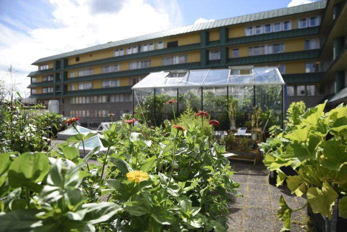 Takfarmens växthus