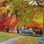 Best Places to See Fall Colors in Missouri:Fall Color Forecast