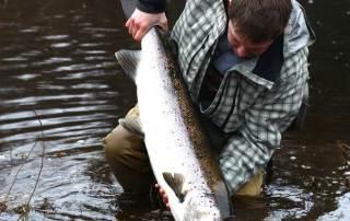 fiska i Mörrumsån