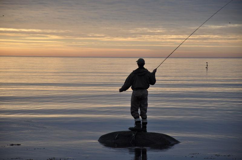 Havsöringsfiske i Skåne