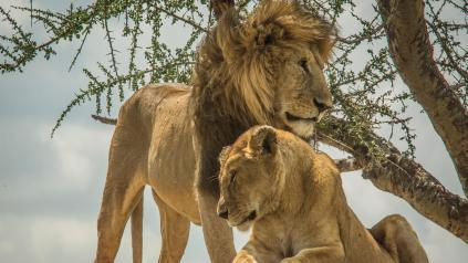 Tanzanya turu ve afrika safari turları