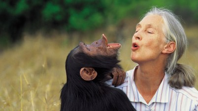 "Image result for ""jane goodall"""