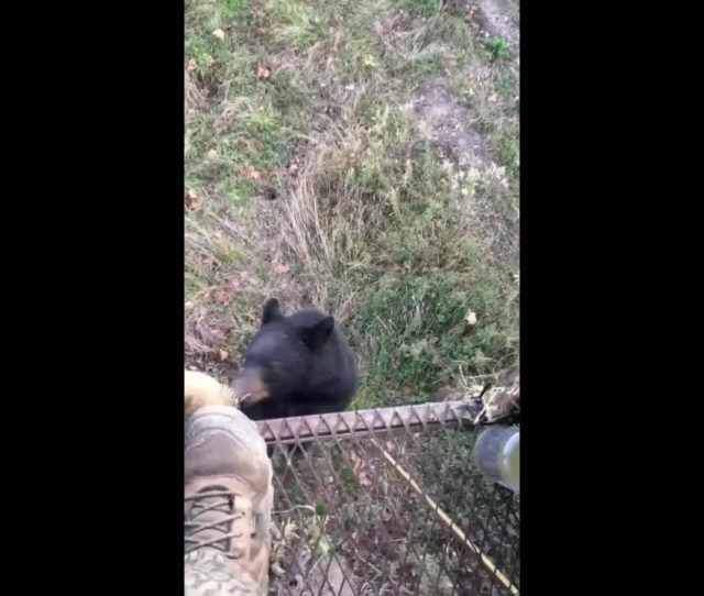 A Bear Joined Two Hunters In A Mississippi Deer Stand They Had Just Eaten Honeybuns