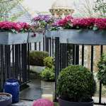 Ask The Expert 10 Tips To Transform A Tiny Balcony Into An Instant Garden With Isabelle Palmer Gardenista