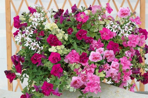 composer une jardiniere spectaculaire