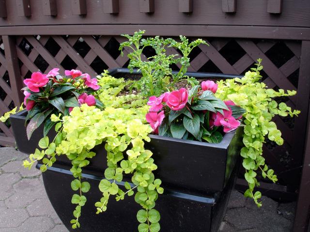 plantes a feuillages decoratifs