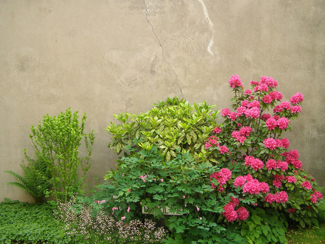 plantes pour massif a l ombre vivaces
