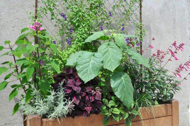 une jardiniere estivale pour decorer un mur