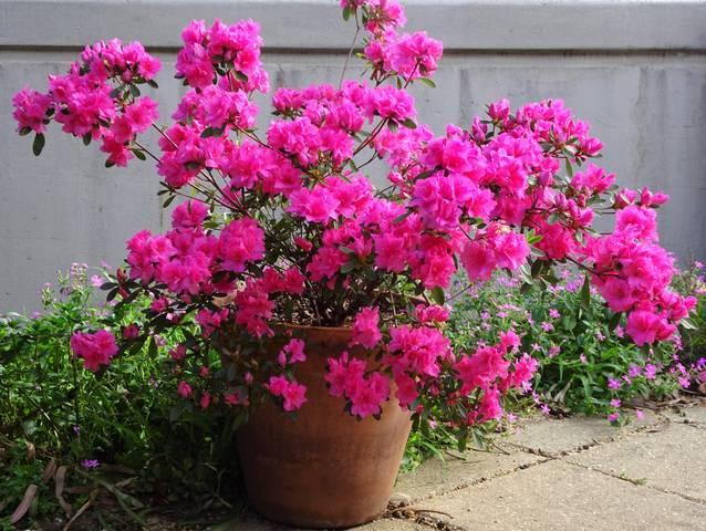 quoi planter ou semer pour fleurir