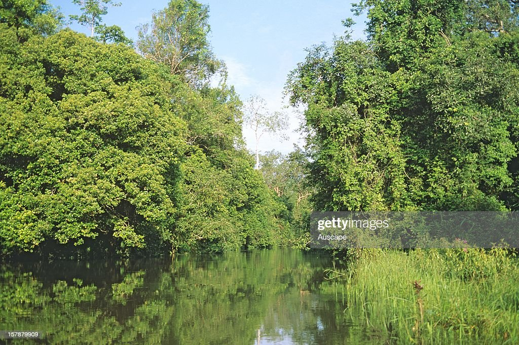 Tropical rainforests usually have large number of plant and animal species, mixed and spread throughout the forest. 104 Equatorial Rainforest Photos And Premium High Res Pictures Getty Images