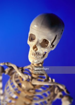 Model Of The Human Skeletal Structure Of The Head And