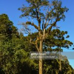 Roads And Rural Roads In The State Of Santa Catarina In Brazil With Pine Trees And Pastures With Preservation Of Nature High Res Stock Photo Getty Images
