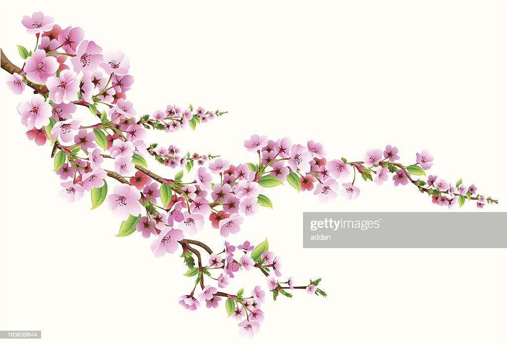 https www gettyimages fr illustrations arbre en fleurs