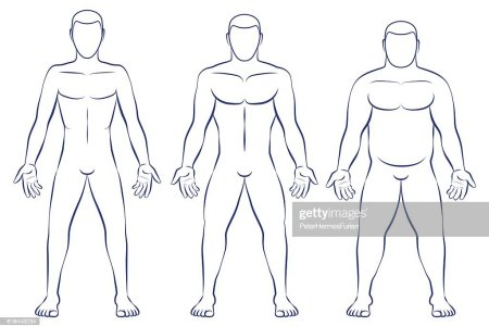 Body types ectomorph 4k pictures 4k pictures full hq wallpaper what is your body type ectomorph or mesomorph or endomorph what is your body type male body types diagram ectomorph skinny mesomorph muscular male body ccuart Image collections