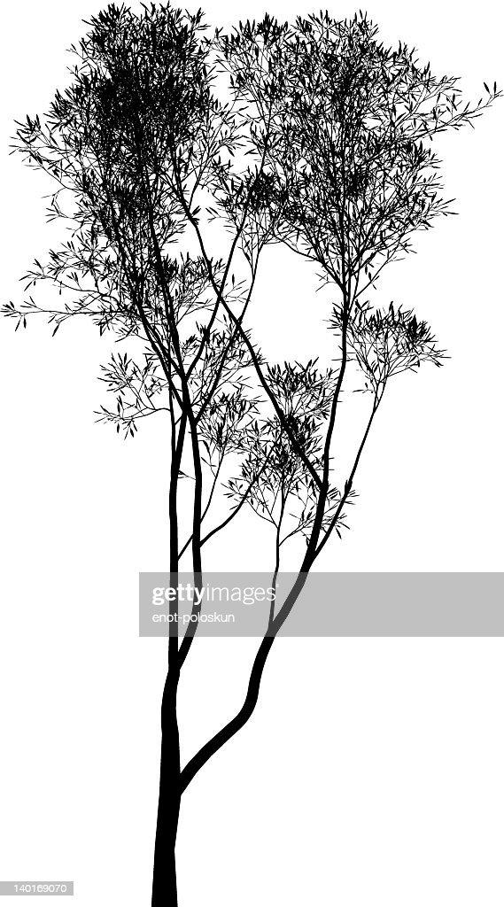 Cartoon Eucalyptus Tree