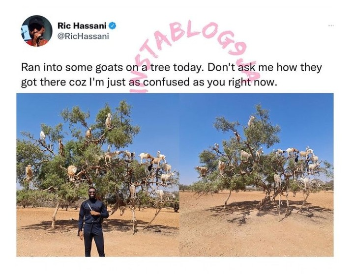 Ric Hassani Surprised To See Tree-climbing Goats In Morocco