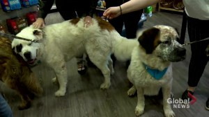 Trio of canine siblings thriving in Calgary