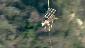 Helicopter rescues horse after it tumbles into L.A. canyon