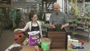 Gardenworks: Planting polar berries