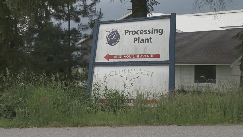 Click to play video 'Migrant workers share abuse allegations after working on Aquilini farm'