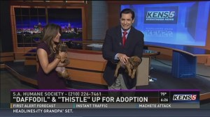Puppy pees on news anchor on live TV