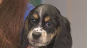 Oshawa puppies looking for forever homes
