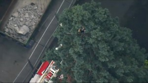 'Tree Standoff' continues in downtown Seattle; man still refuses to come down