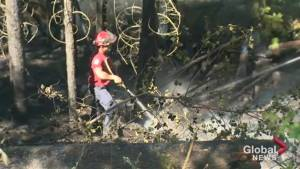 Police officer helps extinguish truck fire in forest