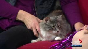 Calgary Animal Services Pet of the Week: Peggy Sue