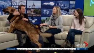 The Kingston Humane Society visits The Morning Show