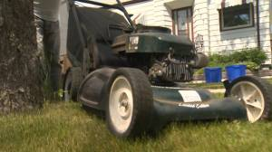 Winnipeg to mow down long grass violators