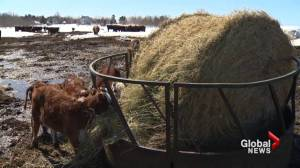 N.S. farmers concerned about lingering effects of brutal winter