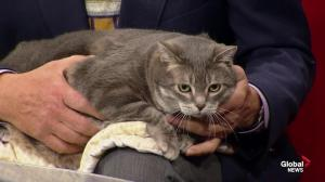 Edmonton Humane Society: Sparkles the cat